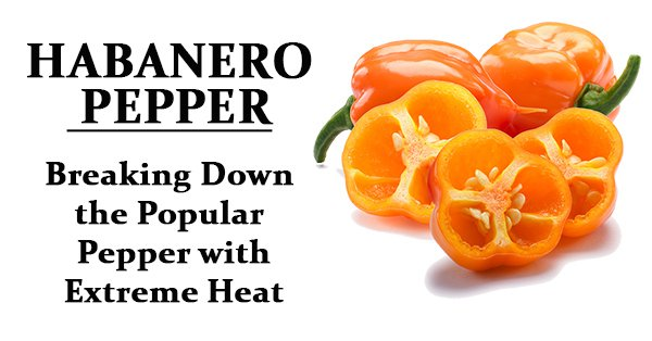 habanero pepper - Breaking Down the popular pepper with extreme heat
