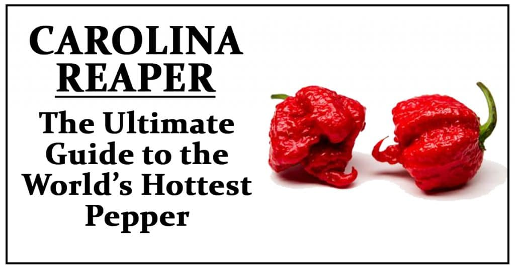 What is a carolina reaper pepper?
