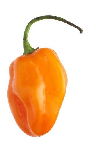 Habanero Pepper - Sonoran Spice