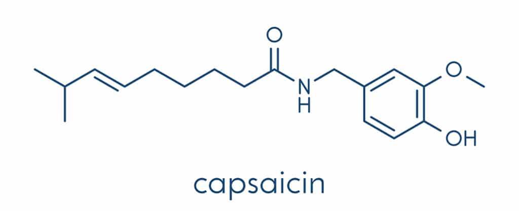 Capsaicin breakdown